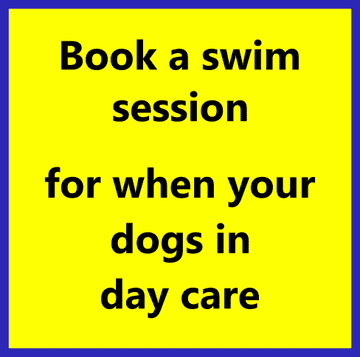 swim session with day care