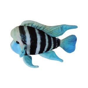 Green Pleco - Frontosa Cichlid Toy