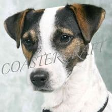 Jack Russell Blue Background