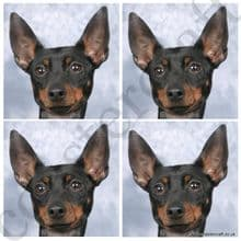 Toy Terrier (English)