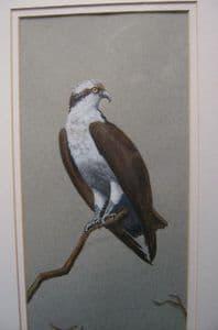 Tony Holahan - Bird of Prey  - Watercolour