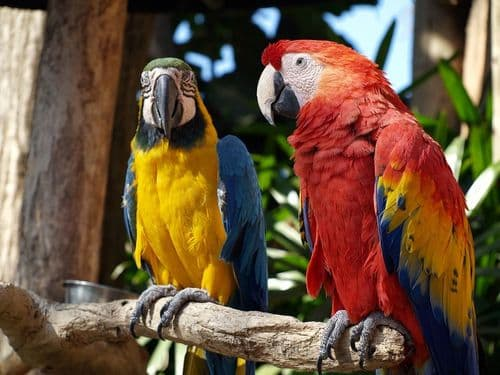 Bird Feed For Specific Breeds