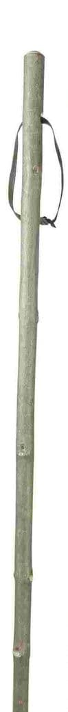 Classic Canes Ash Hiking Staff With Combi - Spike Ferrule