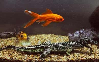 Fish and Reptile Food