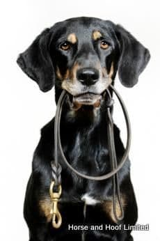 Lifestyle Dog Collars, Tags, Leads & Harnesses